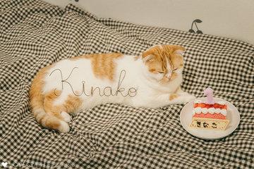 Kinako Birthday  | 家族写真(ファミリーフォト)