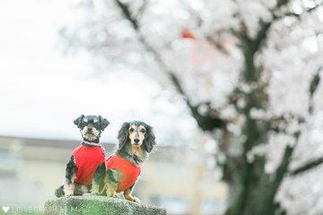 Rin & Ren | 家族写真(ファミリーフォト)