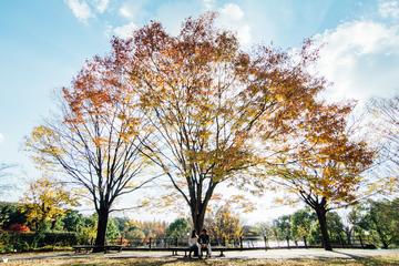 Kenya × Chiharu | カップルフォト