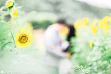 himawari 7/21 | カップルフォト